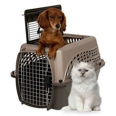 Dog Crates For Travel