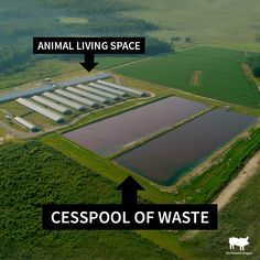 #veganlife #animalrights #veganism #vegansofig #crueltyfree #veganlifestyle #veganism #vegansofinstagram #govegan #vegan #vegan #animalliberation #vegetarian #plantbased #veganfood Factory farming is DISGUSTING. 🤢🤮