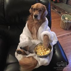 Golden Retriever and Netflix...life is good!