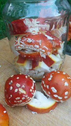 Muchomůrkové mazání na klouby Nejkrásnější z hub - ozdoba lesů - Amanita muscarina - Muchomůrka červená, nazývána též murimucha, vochomůrka, muchovíra a muchotrávka. Z atlasů hub se dozvíme, že se jedná o houbu jedovatou, nikoliv smrtelně jedovatou. Za jedy se považují látky muscarin, muscinou a mykotropin - které se dají využít v lidovém léčitelství ke…
