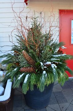 Winter has arrived. Great tutorial on how to make a winter evergreen pot.  http://www.gertens.com/learn/Winter/How-to-create-a-spruce-tip-pot.html