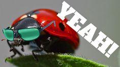 Vidman:A bázisugró katicabogár Bicycle Helmet, Lol, Humor, Memes, Funny, Cycling Helmet, Humour, Meme, Funny Photos