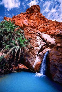 Oasis, Chebika, Tunisia