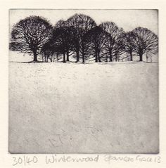 Winter Wood by Pamela Grace                                                                                                                                                                                 More Etching Prints, Tree Drawings, Drawing Trees, Woodblock Print, Monoprint Artists, Intaglio Printmaking, Linoprint, Etchings, Cyanotype