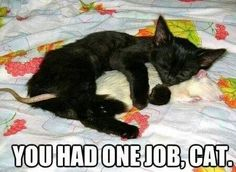 Silly funny cat #funnycatmemes #funnycats find more funny cats here http://www.funnycatsblog.com #youhadonejob