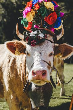Désaples | Morgins, Valais N Animals, Farm Animals, Cute Animals, Harvest Moon Fomt, Cute Cows, Cattle, Beautiful Creatures, Animal Photography, Cutest Animals