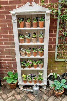 Garden Seeds, Garden Pots, Plant Theatre, Primula Auricula, Alpine Garden, Terracotta Flower Pots, Small Outdoor Spaces, Primroses, Back Gardens