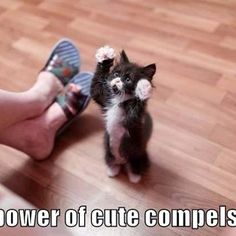 The power of cute compels you! And I must obey.