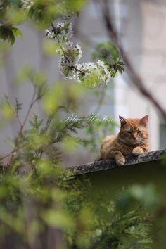 Relaxin' on my garden wall.....
