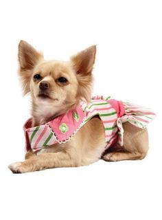 6c61048602156 14 best Dogs with clothes  3 images on Pinterest