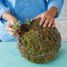 How to make a hanging succulent ball - Lowe's                                                                                                                                                                                 More