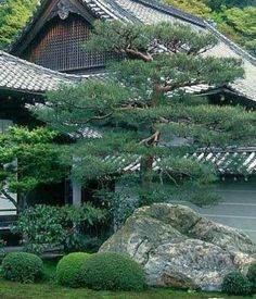 The Basics of Japanese Gardening