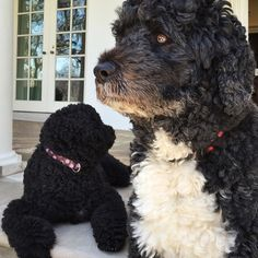 March 2015 | Bo and Sunny hanging out on the colonnade.