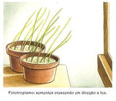 Movimentos Vegetais :: Fisiologia vegetal