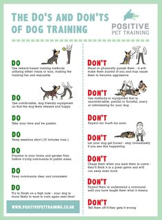 Training your puppy is about building your relationship with your canine as well as implementing boundaries. Be firm yet consistent and you'll see incredible results in your dog training efforts. Puppy Training Tips, Training Your Dog, Training School, Training Classes, Training Videos, Puppies Tips, Dogs And Puppies, Doggies, Baby Puppies