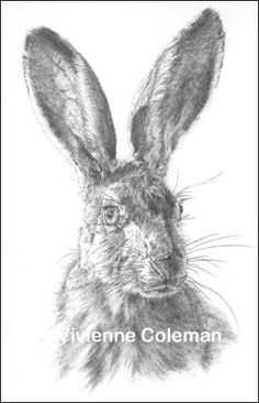 Awesome drawing! Looks like a hare or jack rabbit