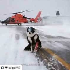 Piper, doing what he does best! Keeping aircraft safe in all kinds of weather.