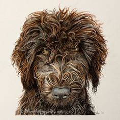 Sydney - Labradoodle Coloured Pencil Portrait by Angie.