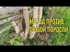 Wood, Plants, Youtube, Lawn And Garden, Woodwind Instrument, Timber Wood, Trees, Plant, Youtubers