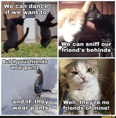 """These """"Best 22 Cat Memes Sassy"""" are so hilarious that will make you Funny and LOL for whole day.We are sure you will enjoy these """"Best 22 Cat Memes Sassy"""". Best Cat Memes, Cute Cat Memes, Cute Animals With Funny Captions, Funny Animal Memes, Cute Baby Animals, Funny Dogs, Funny Animals, Funny Kitties, Animal Humor"""