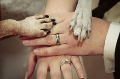 Dogs in Weddings Are More Common Than Ever