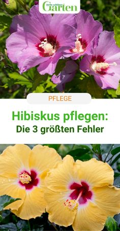 Most Beautiful Pictures, Cool Pictures, Decoration Christmas, Life Quotes To Live By, Diy Garden Decor, Exotic Flowers, Ikebana, Hibiscus, Garden Plants