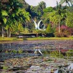 Botanic Garden - Sao Paulo, Brazil