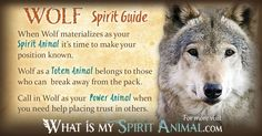 In-depth Wolf Symbolism & Wolf Meanings! Wolf as a Spirit, Totem, & Power Animal. Plus, Wolf in Celtic & Native American Symbols & Wolf Dreams!