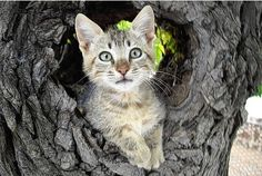 2 Month Kitten Rescue: From Greece To England - All About Cats I Love Cats, Cute Cats, Zoo Animals, Cute Animals, Hi Gorgeous, Lots Of Cats, Kitten Rescue, All About Cats, Greek Islands