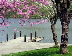 Lake Kittamaqundi Spring, Columbia, MD