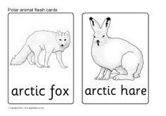 Polar animal flash cards