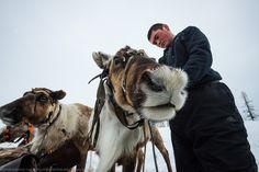Flora and fauna :: Encyclopedia Flora And Fauna, Central Asia, Arctic, Reindeer, Camel, Russia, Animals, Inspiration, Biblical Inspiration