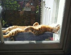 Ah! Just right! I can stretch out and sleep. It's nice to be outdoors. But I need my Sunbath, and the ground is wet and cold! This window box is just right!
