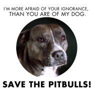 love the pitbulls.