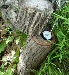 In a Pre-Cut Log | 19 Ridiculously Creative Geocache Containers