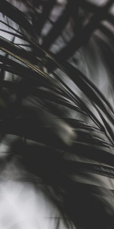 Flowers black background photography inspiration 67 ideas for 2019 Tumblr Wallpaper, More Wallpaper, Colorful Wallpaper, Flower Wallpaper, Animal Wallpaper, Green Wallpaper, Pattern Wallpaper, Wallpaper Ideas, Black Wallpaper Iphone Dark