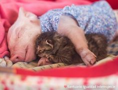 Pig and Kitty