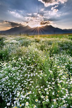 Sunset by The High Tatras, by Richard Pavlicek... #field #sky #flowers #landscape #sunrise #sunset #mountains #nature #sun #clouds #countryside #country #hills #rural #meadow #fineart #skyporn #Europe #Slovakia #HighTatras