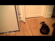 #Baby Sock Scares The #Cat - #funny
