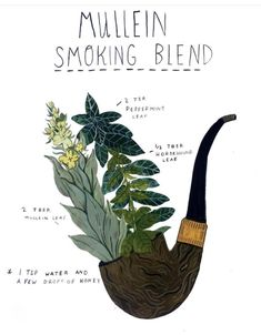 How To Craft Your Own Herbal Smoking Blends Herbal Academy Learn how to create your own herbal smoking blends that are enjoyable and can benefit your health at times Home Remedies For Uti, Uti Remedies, Natural Health Remedies, Herbal Remedies, Holistic Remedies, Healing Herbs, Medicinal Plants, Natural Healing, Herbal Plants