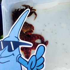 MC Drip hangs out with some sea stars at the Gig Harbor Lighthouse 25th Anniversary.