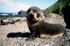 Baby sea lion. (: