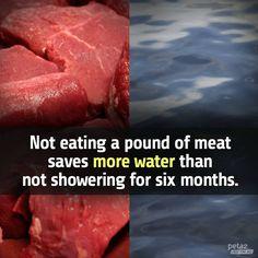 Support Animal Rights. Go Vegan. Vegan Facts, Vegan Memes, Vegan Quotes, Why Vegan, Vegan Vegetarian, Vegetarian Quotes, Going Vegetarian, Reasons To Be Vegan, Vegan Animals