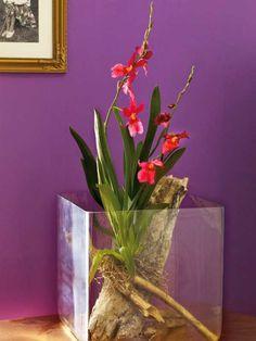 orchidee vanda umtopfen