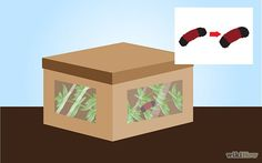 How to Care for Woolly Bear Caterpillars. Woolly bears, the caterpillar form of the Tiger Moth, are a well-known sign of spring in North America. These charmingly fluffy caterpillars can be raised to adults at home as an educational. Wooly Bear Caterpillar, Tiger Moth, Bear Crafts, Spring Sign, Little People, Habitats, North America, Activities For Kids, Decorative Boxes