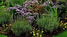 Im Garten blüht es so lala, ... selbst jetzt noch im Oktober, es sind noch ein paar Farben da, von lila bis zinnober. :-)
