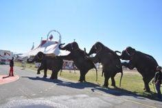 @arlettegruss gouter des elephants frejus