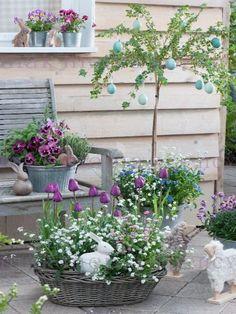 Schöne Tulpen als Garten-Deko im Frühling.