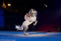 2012_02_18_spettacolo_i_cavalli_di_roma_BARBARAROPPO-7392