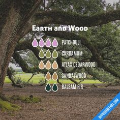 Earth and Wood - Essential Oil Diffuser Blend